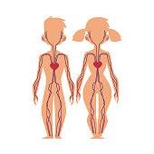 Vector people internal organs anatomy, structure