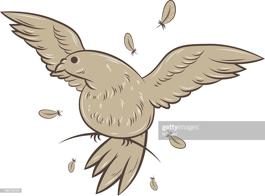 Vector pigeon