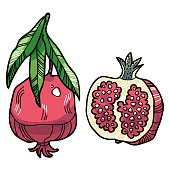 Vector pomegranate with leaves