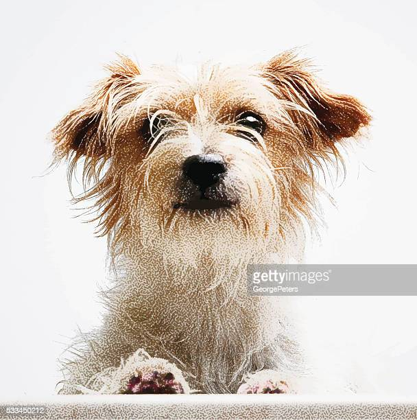 Vector Portrait of a cute Terrier Mixed Breed Dog