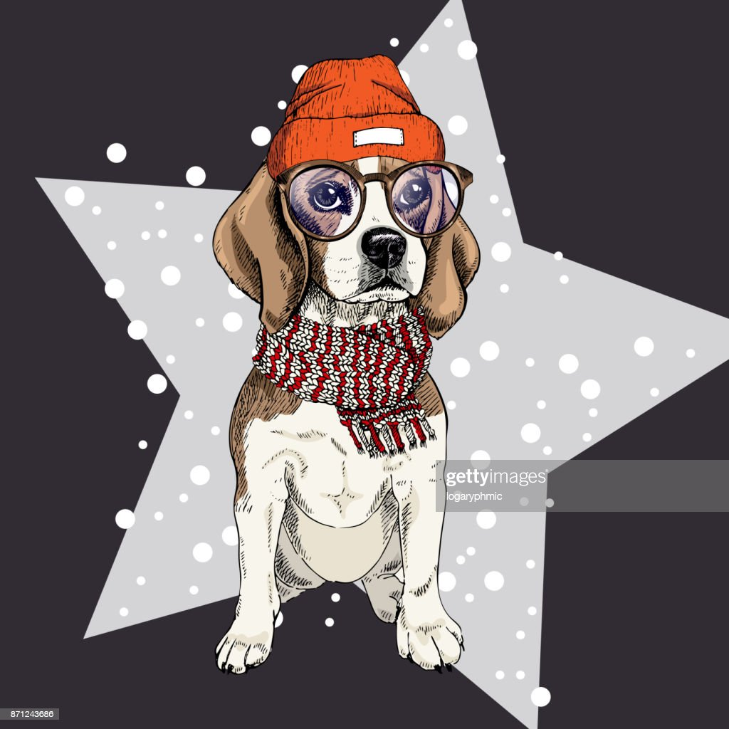 Vektorporträt Von Beagle Hund Trägt Brille Mütze Und Schal Isoliert ...