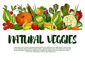 Vector poster of vegetables or veggies harvest