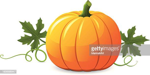 bildbanksillustrationer, clip art samt tecknat material och ikoner med vector pumpkin illustration on white background - pumpa