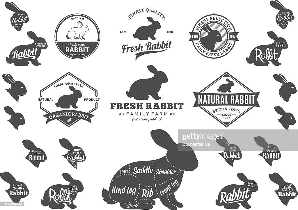 Vector Rabbit Labels, Icons, Charts and Design Elements