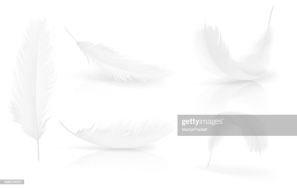 Vector realisitc 3d white bird, angel feathers set