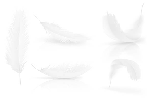 Free feather Images, Pictures, and Royalty-Free Stock