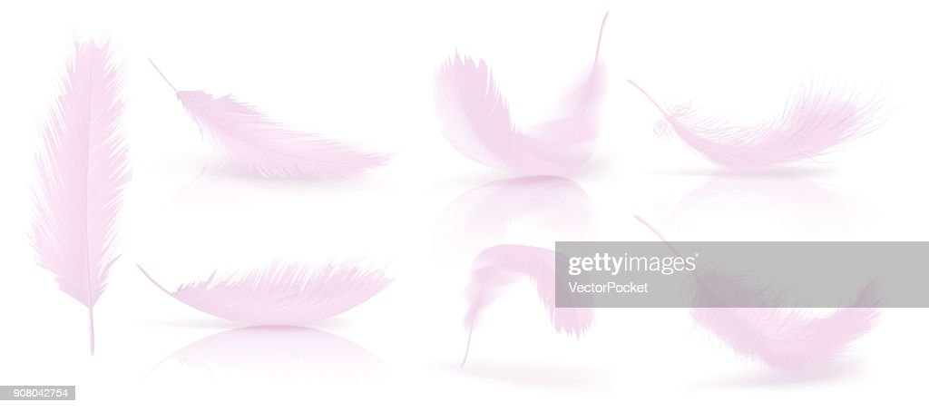 Vector realistic 3d set of pink bird feathers