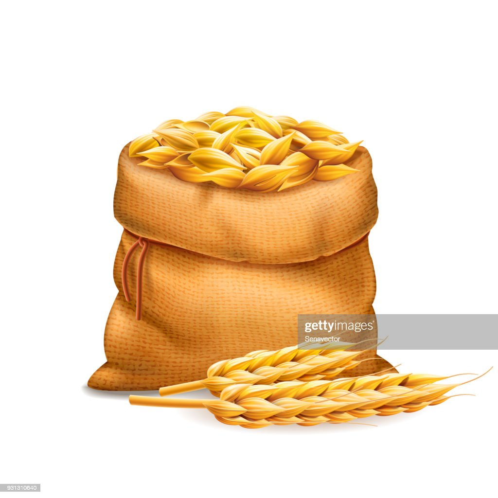 Vector realistic bag with unrefined wheat grains, barley with wheat ears isolated on white background. Design element. Bread and harvest theme. Food and feed. 3d illustraton