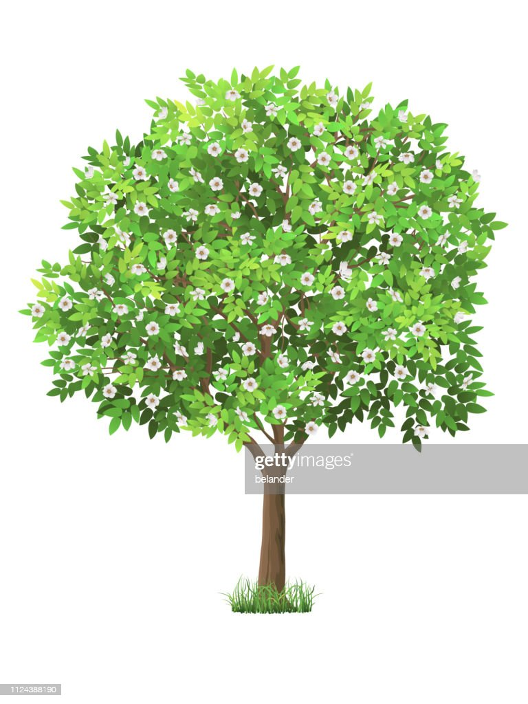 Vector realistic blooming tree
