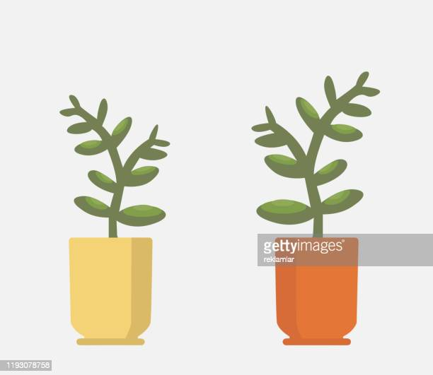 vector realistic fern in a pot. ornamental houseplant. - potted plant stock illustrations