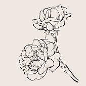 Vector rose flower isolated on white.