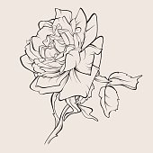 Vector rose flower isolated.