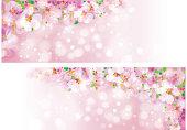 Vector  sakura pink bokeh banners.