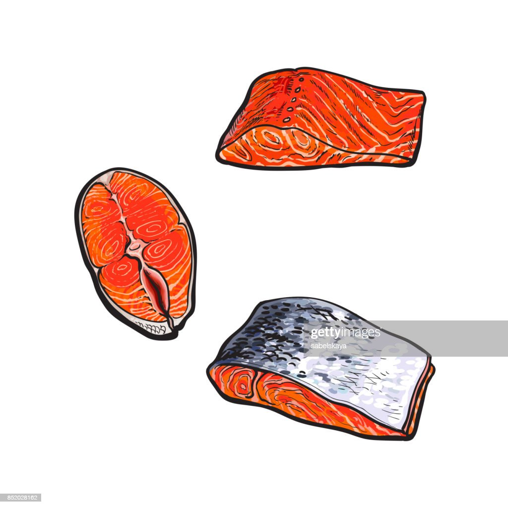 vector sea red salmon fish meat fillet set