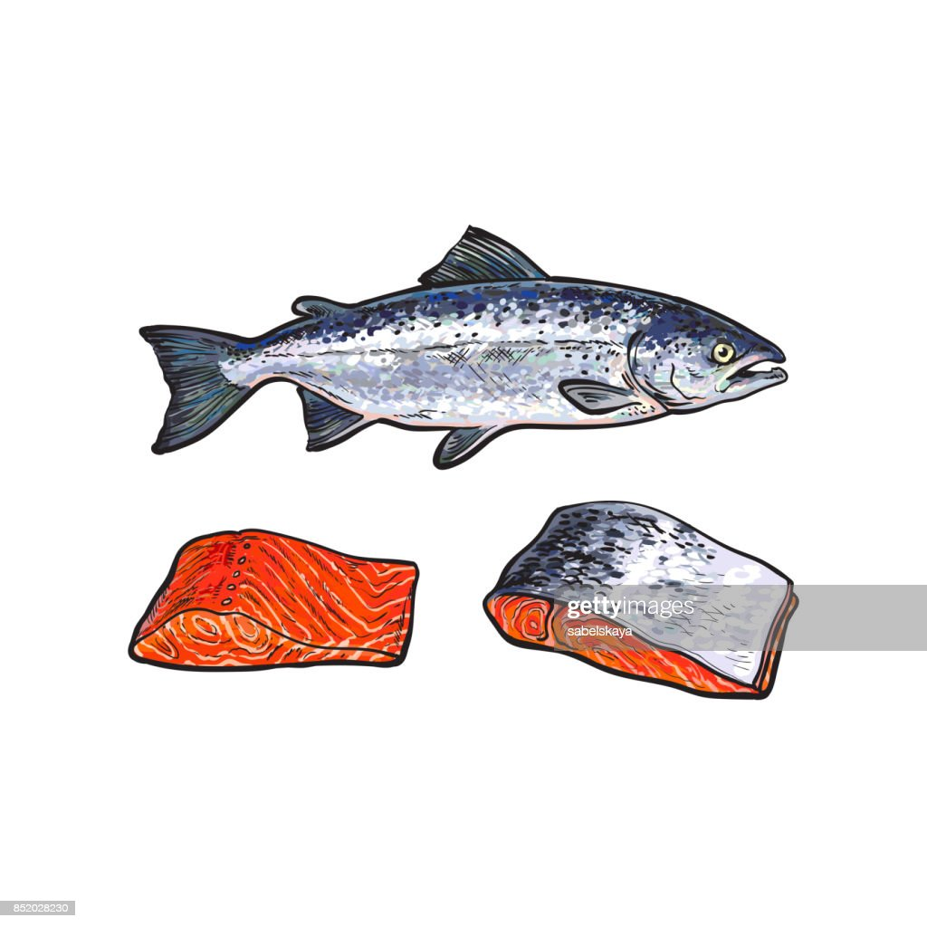 vector sea red salmon fish, meat fillet set