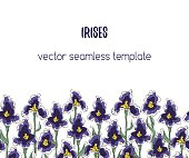 Vector seamless banner with irises