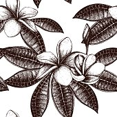 Vector seamless pattern with Ink hand drawn Frangipani (Plumeria) sketch.