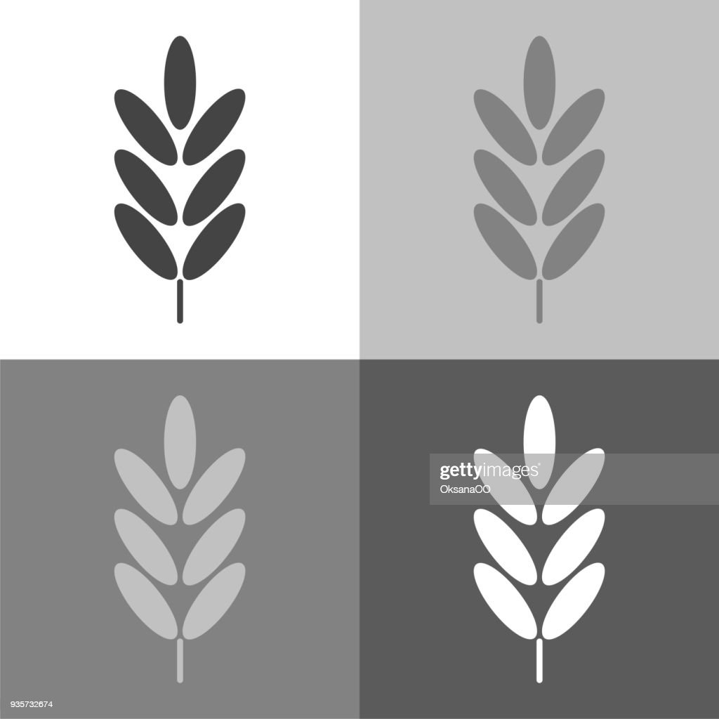 Vector set icon ears of wheat, cereal. Ear of oats. rye ears on white-grey-black color.