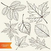 Vector set of autumn leaves silhouettes.