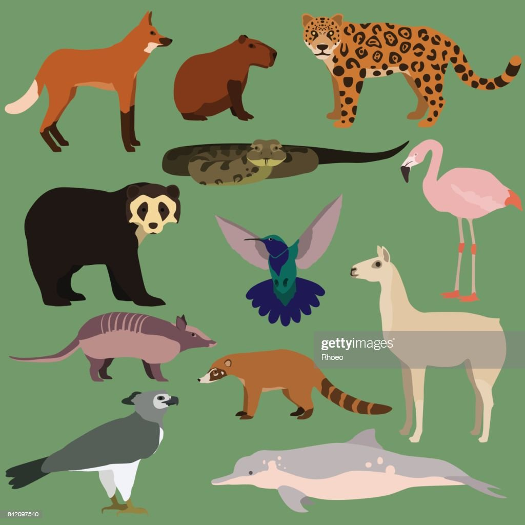 Vector set of cartoon south american animals.