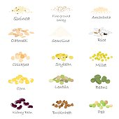 Vector set of cereal and grain emblems. For packing groats, kitchen jar prints, advertising healthy food.