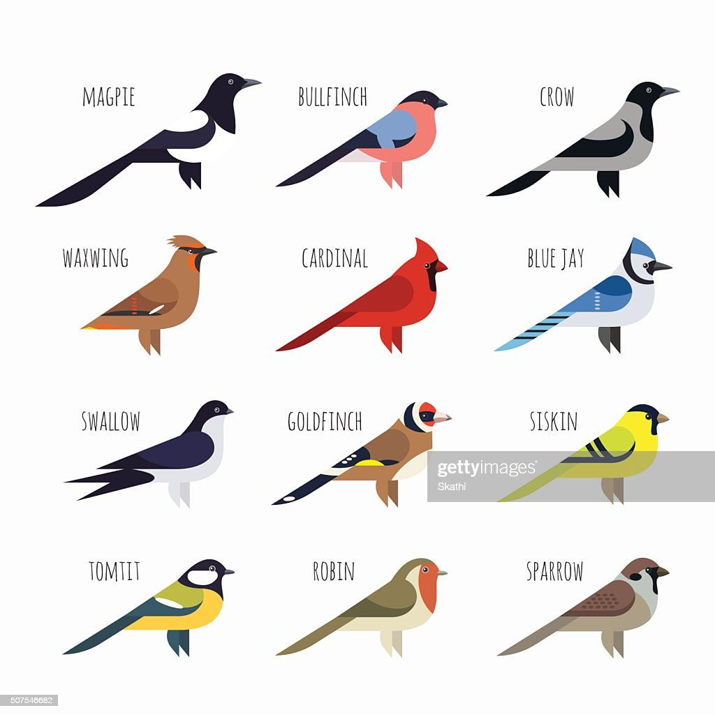 Vector set of Colorful bird icons. Cardinal, magpie, sparrow