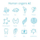 Vector set of contour icons with human organs