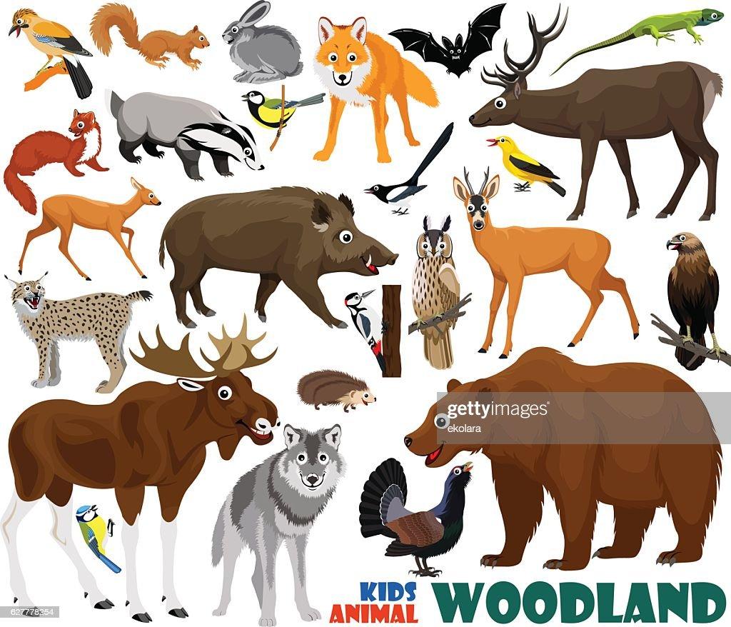 vector set of cute woodland kids animals