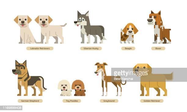 フラットスタイルの犬のベクトルセット - シベリアンハスキー点のイラスト素材/クリップアート素材/マンガ素材/アイコン素材