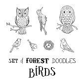 Vector set of forest doodles birds.
