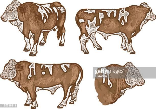 ilustraciones, imágenes clip art, dibujos animados e iconos de stock de vector conjunto de cuatro de la carne de vaca o dirección - beef pie