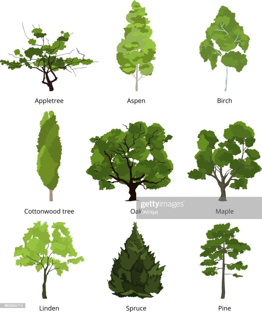 Vector set of green garden trees. Nature illustrations isolate on white