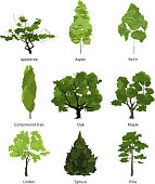 Vector set of green garden trees. Nature illustrations isolate on white