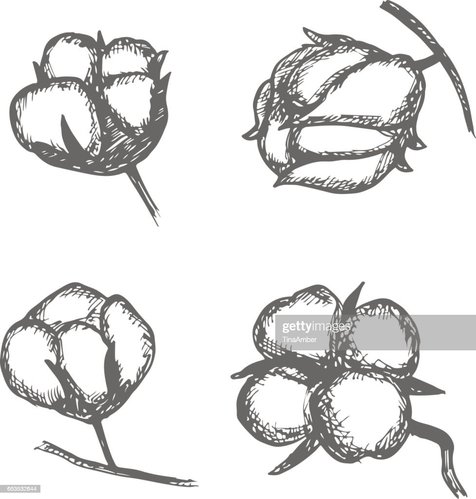 Vector Set Of Hand Draw Ink Cotton Plant Cotton Icons Illustration