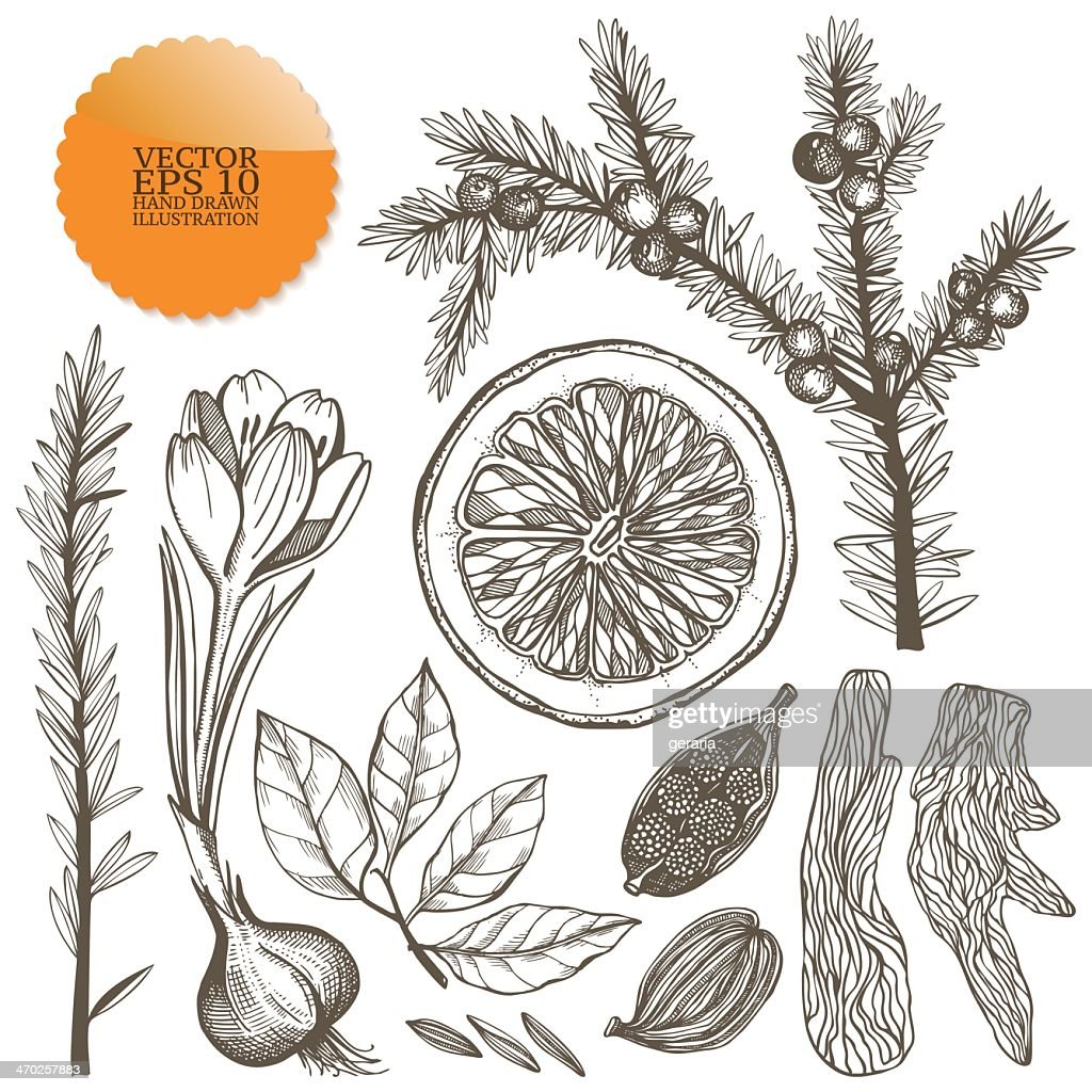 A vector set of hand drawn spices in gray pencil