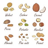 Vector set of hand sketched nuts on white background.