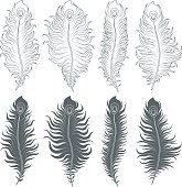 Vector set of illustrations with peacock feathers. Isolated objects