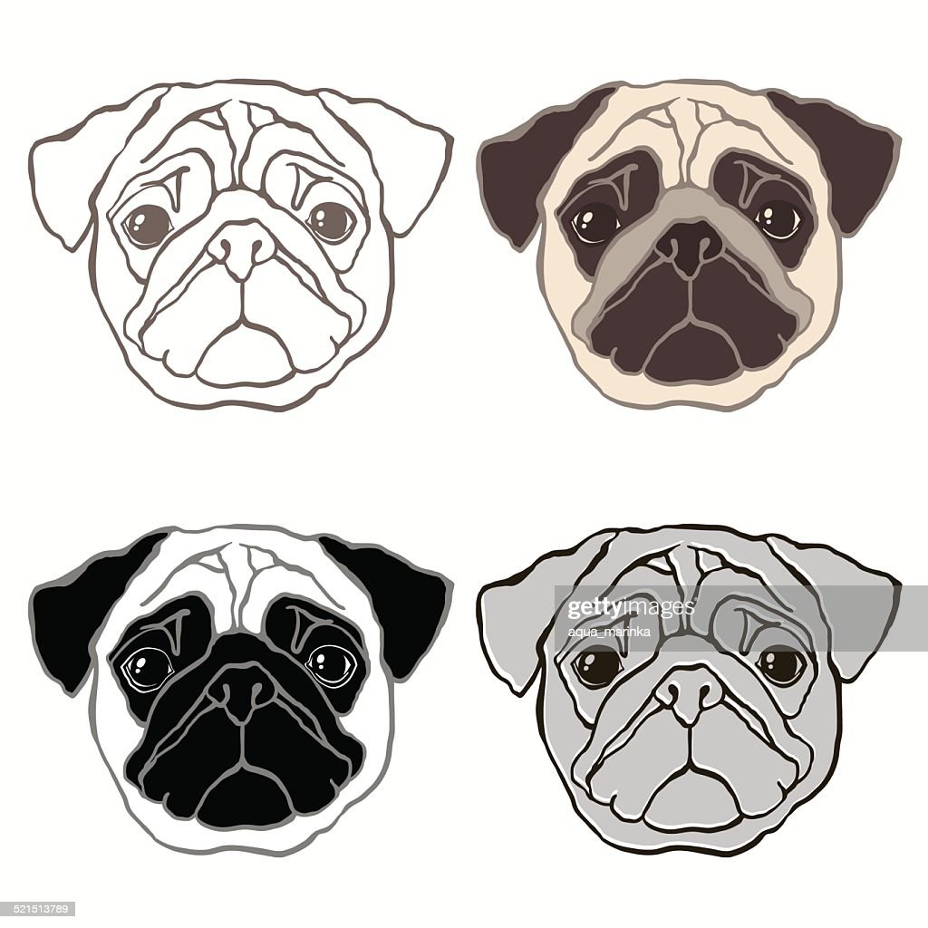 Vector set of  pug's face.  Sketch, four variants.