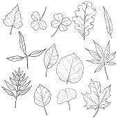 Vector Set of Sketch Tree Leaves.