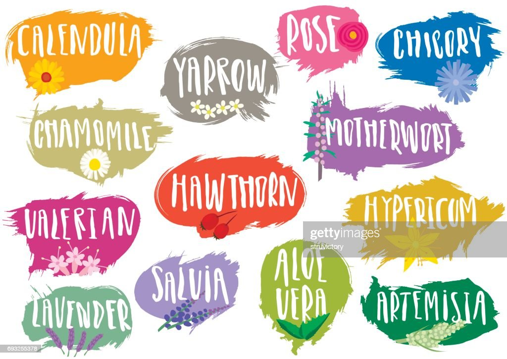 Vector set of trendy emblems, tags for medicinal herbs.