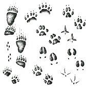Vector set of walking wild wood animal and bird tracks