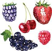 vector set of watercolor drawing berries