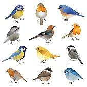 Vector set of wild colorful birds
