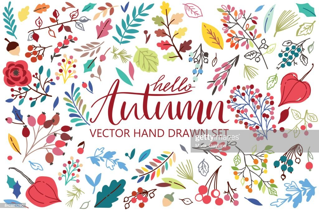 Vector set on white background with leaves, berries, flowers. Autumn cillection for your design