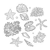 Vector set sea shells stars corals and pearls different shapes. Clamshells starfishes polyps monochrome black outline sketch illustration on white background for design marine tourist cards logos.