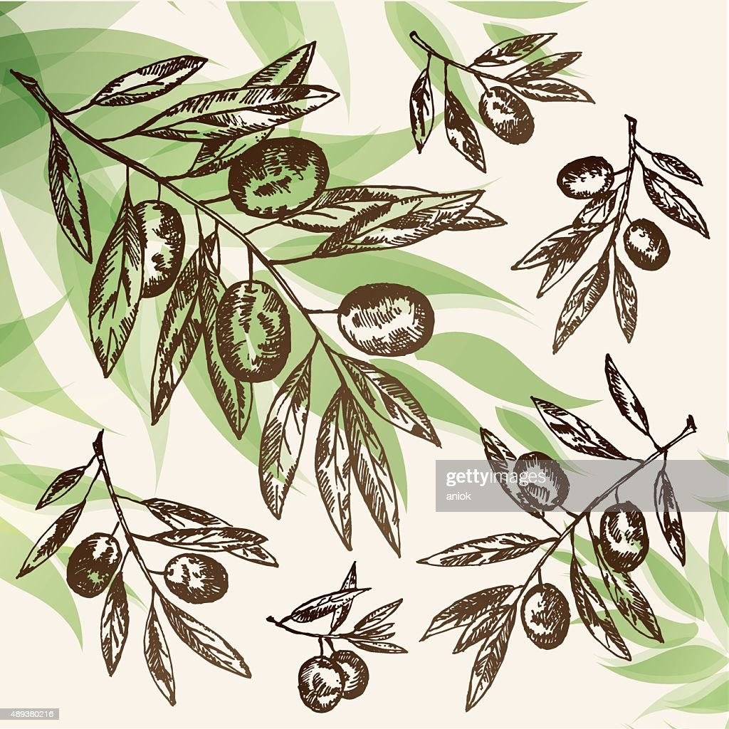 Vector set:olive branch. hand drawn