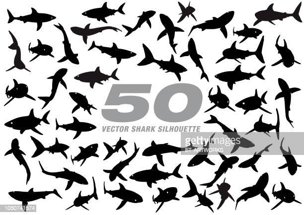 50 vector shark silhouette - sharks stock illustrations