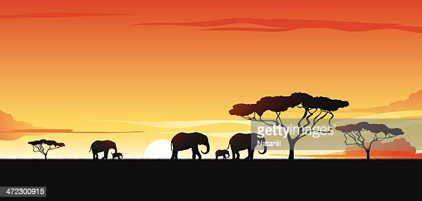 Vector silhouette of elephants and trees on a savannah