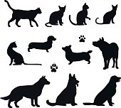 Vector silhouette of pet