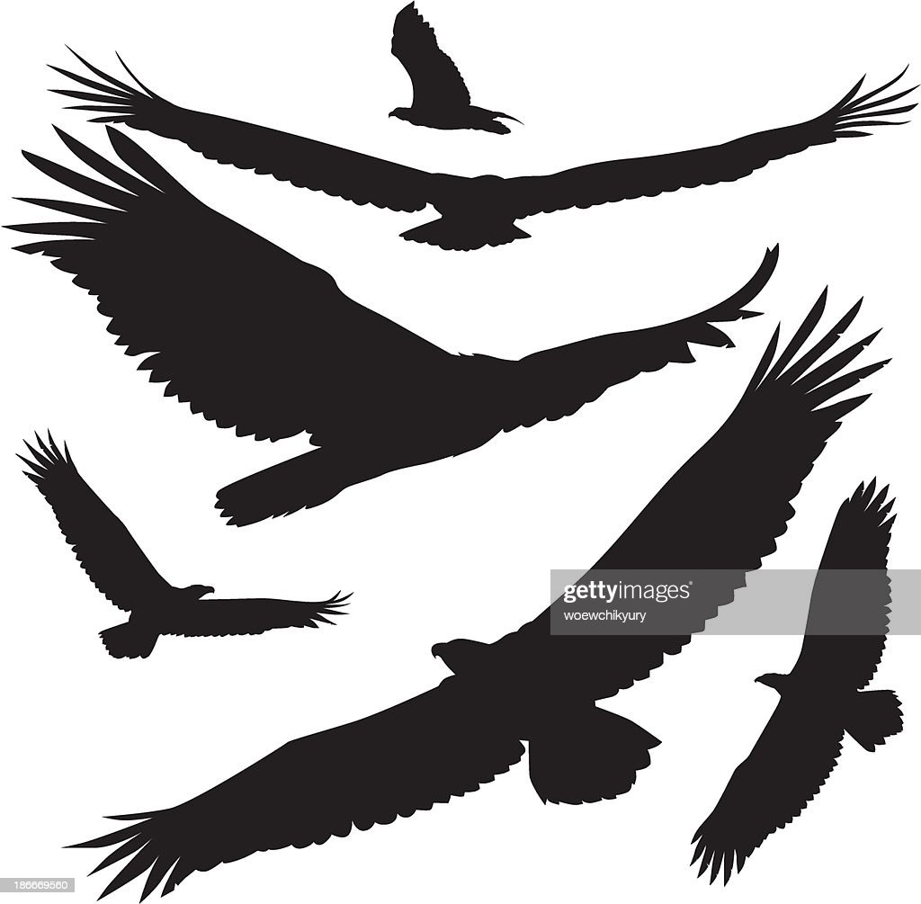 vector silhouettes eagle